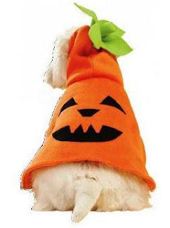 Dog Halloween pumpking costume sewing pattern