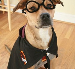 Dog Harry Pottern Halloween costume sewing pattern