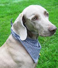 Dog scarf bandana sewing pattern