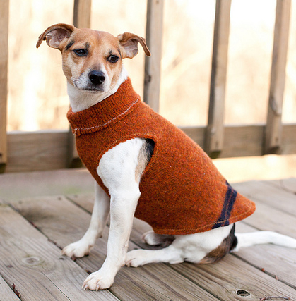 Dog coat from sweater with sleeve holes sewing pattern